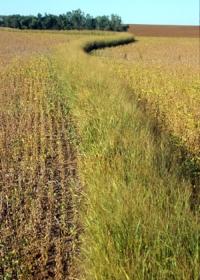 Conservation buffer strip