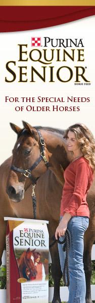 Equine Senior Banner