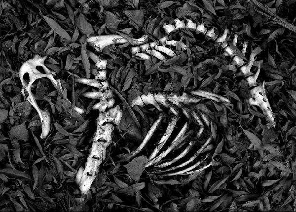 Skeleton Large