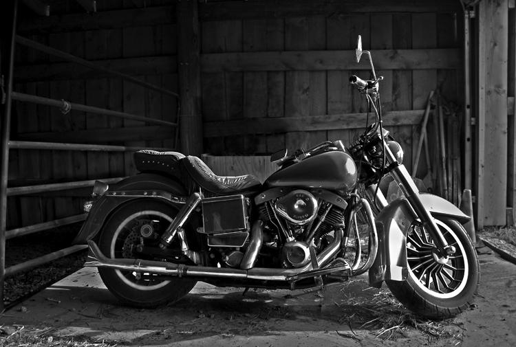 Bear's Harley