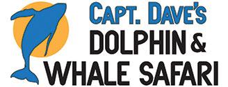 Dolphin Safari Logo