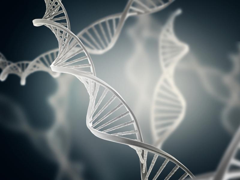 Illustration of deoxyribonucleic acid structure  DNA  3d