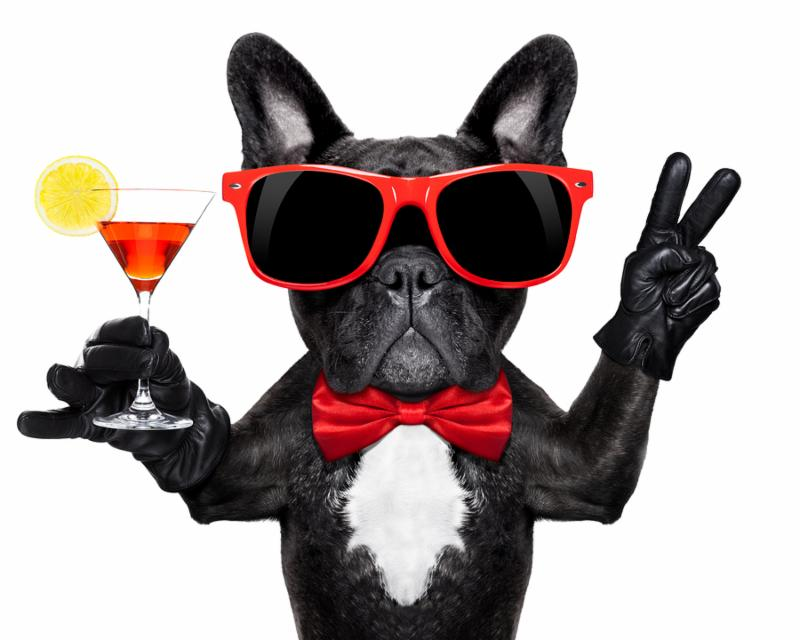 french bulldog dog holding martini cocktail glass ready to have fun and party isolated on white background