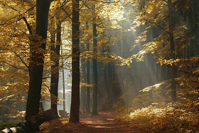 """American Minute with Bill Federer """"Two roads diverged in a wood, and I- I took the one less traveled by…"""" -Robert Frost"""