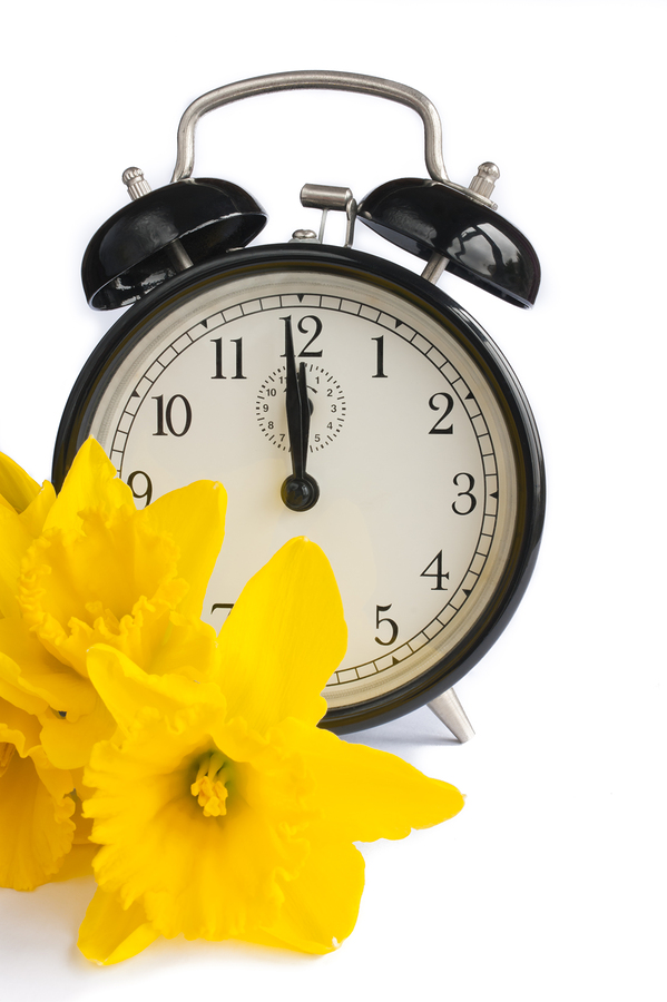 Vintage alarm clock with yellow daffodil flowers on white. Concept for spring and dst. In spring we