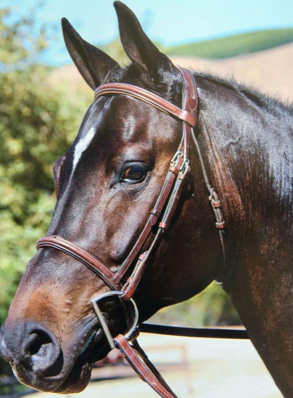Horse - Monaco