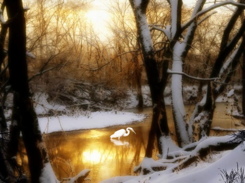 Crane Snow Trees