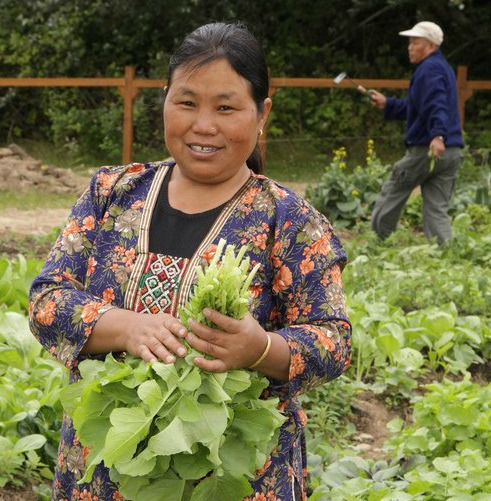 A refugee from Bhutan harvests greens in the Tukwila Community Garden in Seattle, Washington.