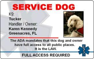 Service Dog Certificate Template | Free Service Dog Id Card