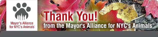 Thank You! from the Mayor's Alliance for NYC's Animals
