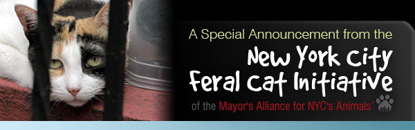 A Special Announcement from the NYC Feral Cat Initiative
