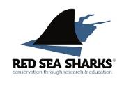 Red Sea Shark Conservation