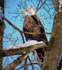 Eagle Rockwell 2003