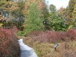 Bog Trail Tamarack - R1