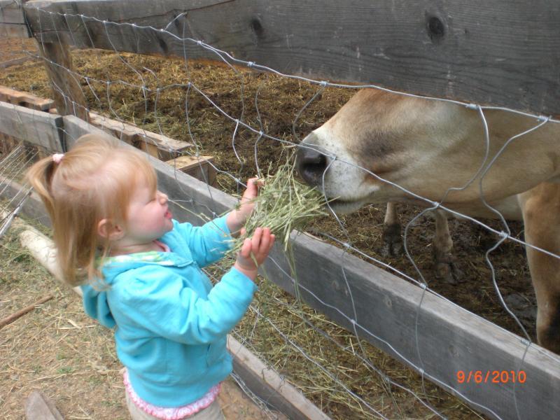 Abigail Feeding the Cow