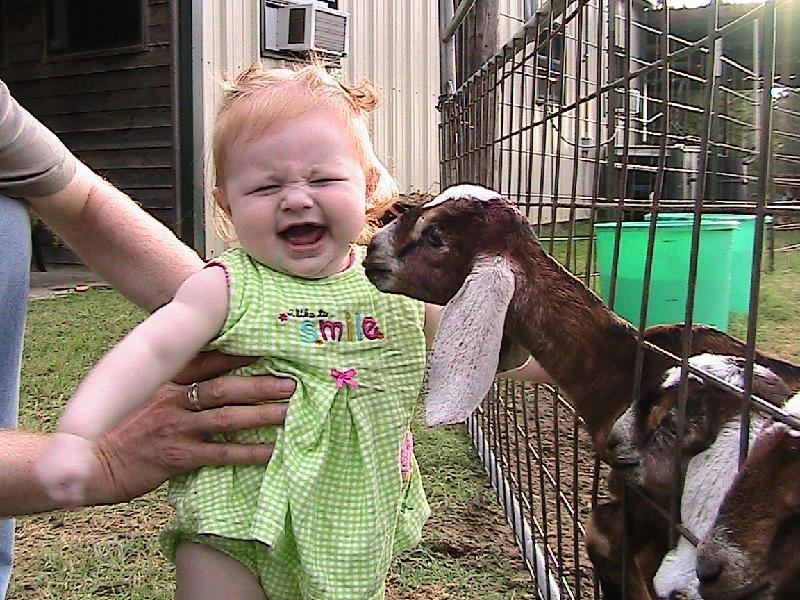 Abby and Baby Goats