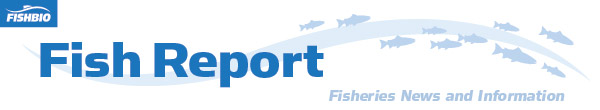 fish report header