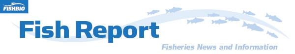 fish report header