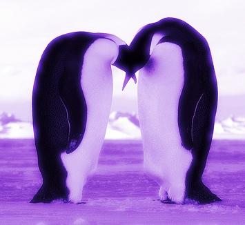 Penguins on Purple