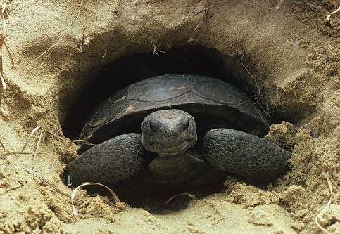 Tortoise Burrow