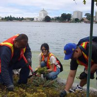 lake M weed warriors