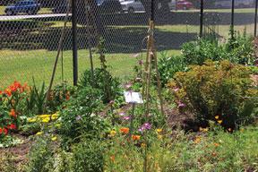 city cmty garden