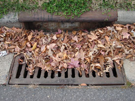 leaves on storm drain