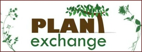 odette plant xchg logo