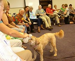 participants interacting with visiting dogs