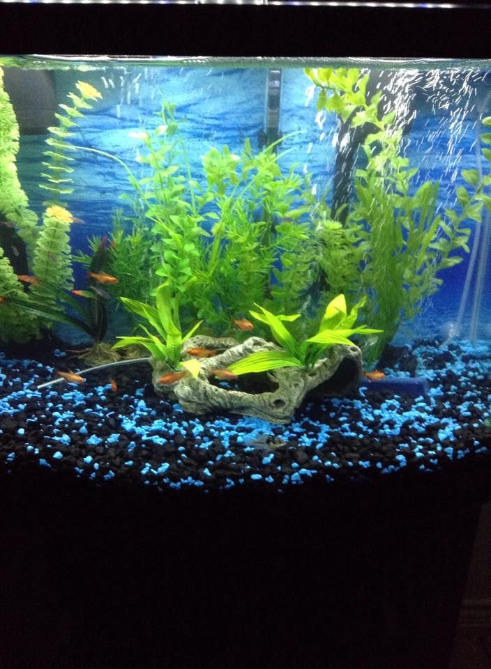 aquarium with bubbles, greenery, and small fish