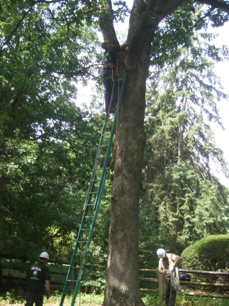News from Alive Tree Care