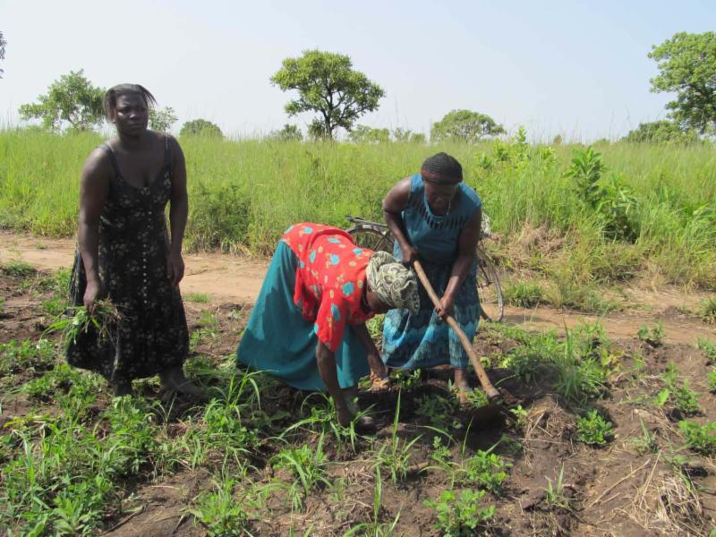 Kitgum ladies weeding new plants