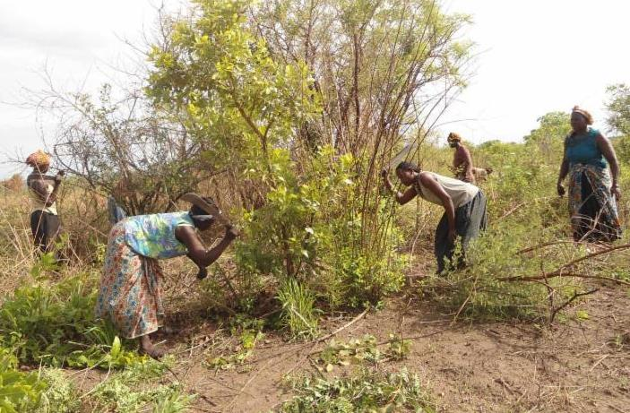 Kitgum women clearing land
