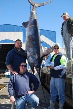 David Dion swordfish