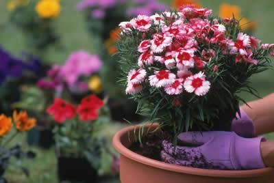 repotting-flowers.jpg