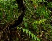 Forest scene3