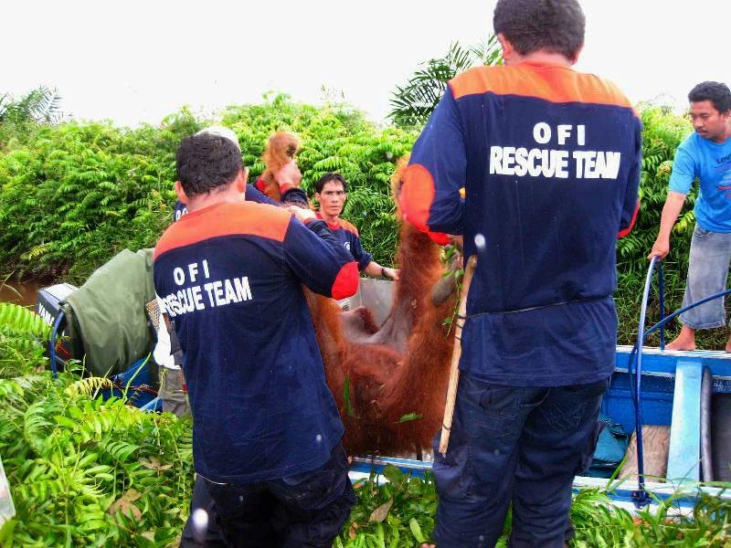 OFI Rescue Team