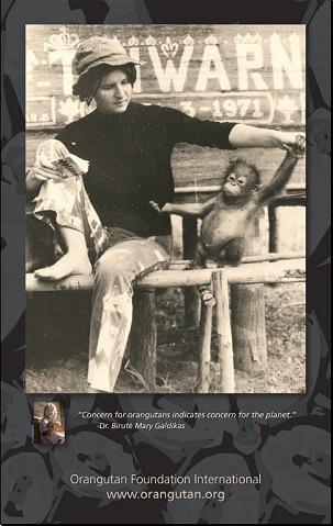 1971 Dr. Galdikas Poster