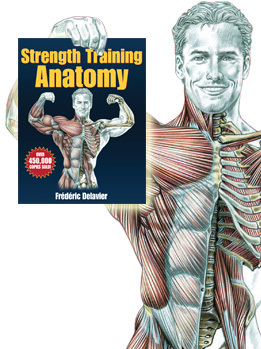 strength training anatomy pdf free