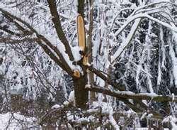 snow damage