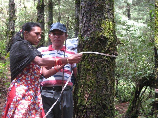 hemalaya  community forestry