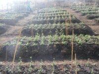 Biogas Pic 2