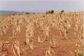 Drought in Kenya 2