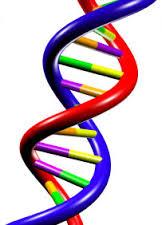 DNA coils