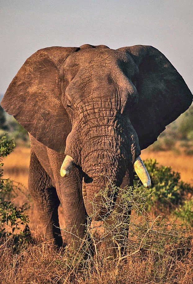 Elephant, Open Parks Network