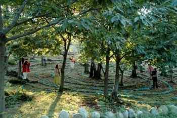 Sacred Woods of Damanhur