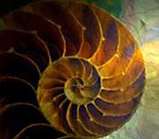 Nautilus store logo 2
