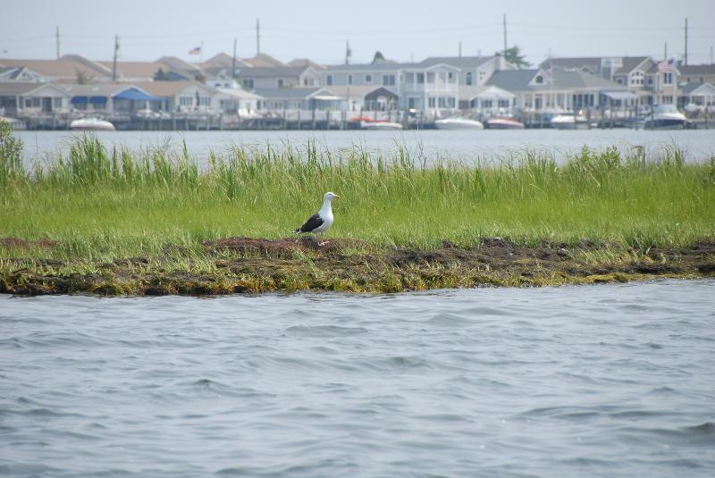Barnegat Bay and Seagull