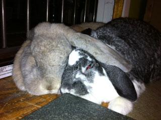 Babette and Herbert