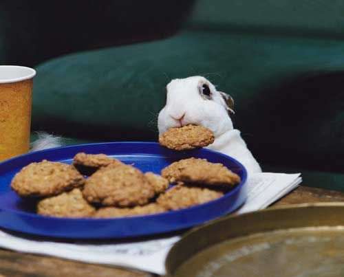 Bunny stealing a cookie